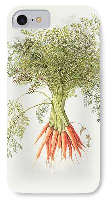 Carrot iPhone 7 Cases