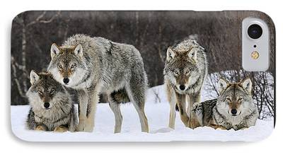 Timber Wolf Image iPhone Cases