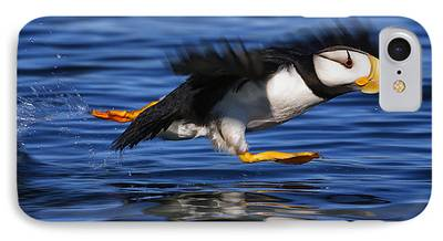 Puffin iPhone Cases