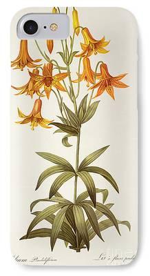 Lilium Penduliflorum iPhone Cases