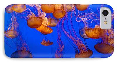 Image Of Jelly Fish iPhone Cases