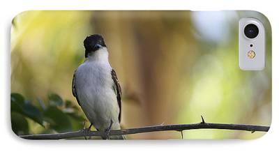 Birds On Limbs iPhone Cases