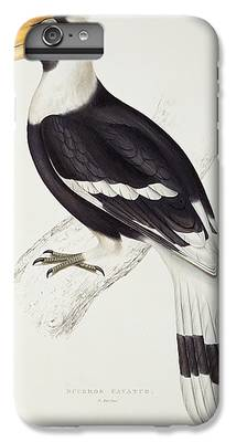 Hornbill iPhone 7 Plus Cases