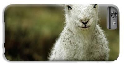 Sheep iPhone 7 Plus Cases
