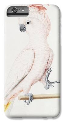 Parakeet iPhone 7 Plus Cases