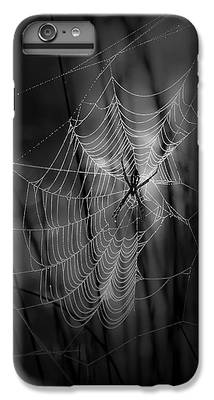 Spider IPhone 7 Plus Cases