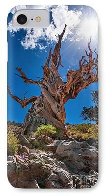 Pine Tree iPhone Cases