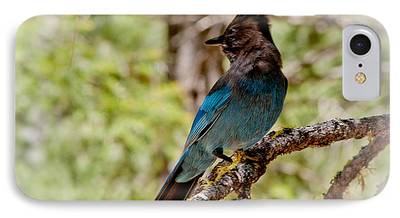 Stellar Jay iPhone Cases