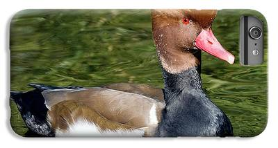 Red-crested Pochard iPhone 8 Plus Cases