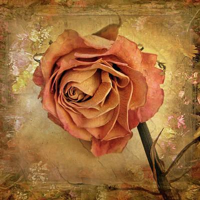 Single Rose Stem Posters