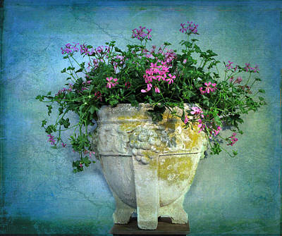 Stone Flower Planter Posters