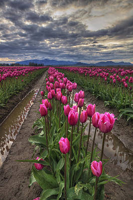 Impressions Of Tulips Posters