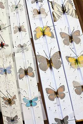 Lepidopterists Posters