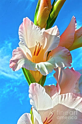 Gladiole Posters