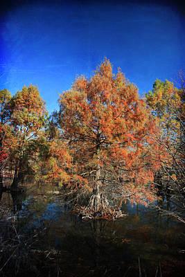 Tree Roots Digital Art Posters