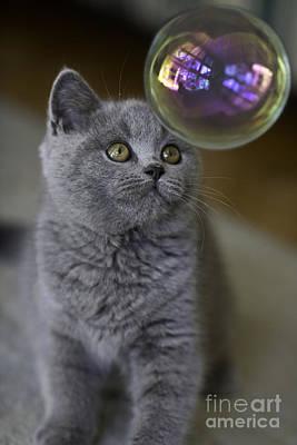 Cute Cat Posters