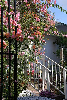 Roses Behind Fences Posters