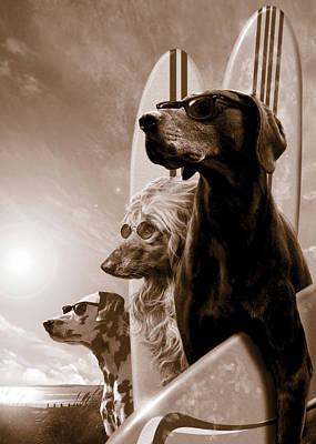 Sea Dog Posters
