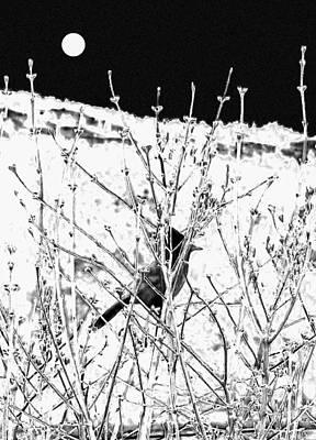 . Bird. Stellar Jay. Winter. Snow Posters