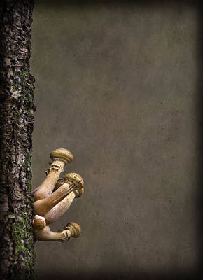 Shroom Photographs Posters