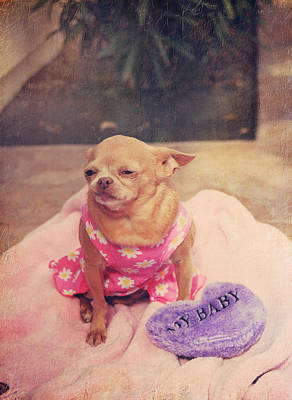 Doggy Clothes Posters