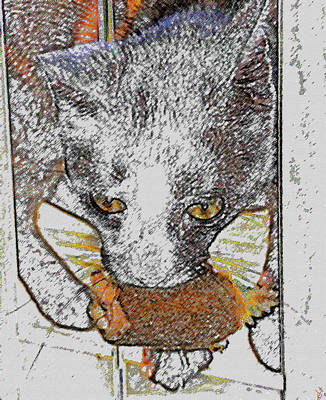 Cat Toy Digital Art Posters
