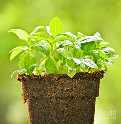 Pot Plant Posters