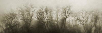 Treeline Photographs Posters