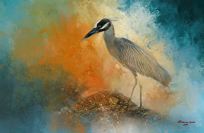 Yellow-crowned Night Heron Posters