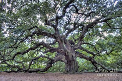 Oak Trees Posters