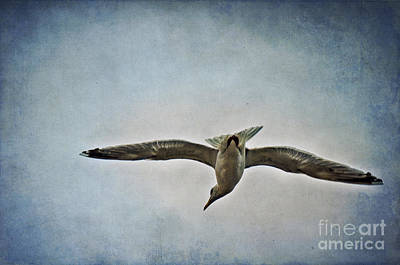 Flying Seagull Mixed Media Posters