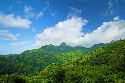 El Yunque National Forest Posters