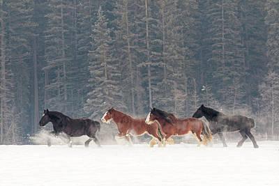 Equus Ferus Caballus Posters