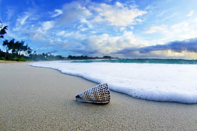 Sea Shell Art Posters