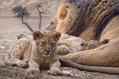 Lion Cub Sleeping Posters