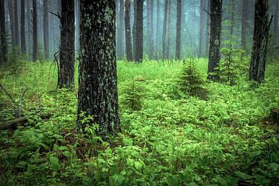 Solstice Glow Solstice Woods Green Trees Forest Fog Mist Hawk Ridge Duluth Posters