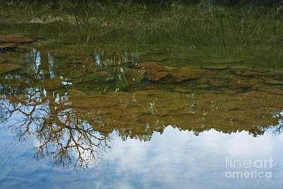 Trees Reflecting In Water Posters