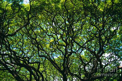Moanalua Posters