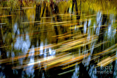 Reflection Of Trees In Stream Posters