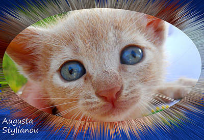 Cyprus Cats Digital Art Posters