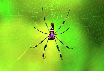 Spider Digital Art Posters