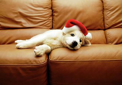 Sleeping Dog Photographs Posters