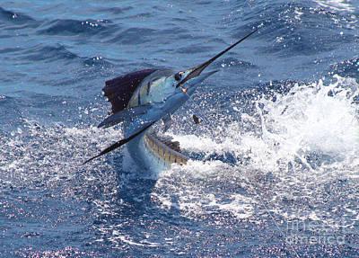 Marlin Azul Photographs Posters