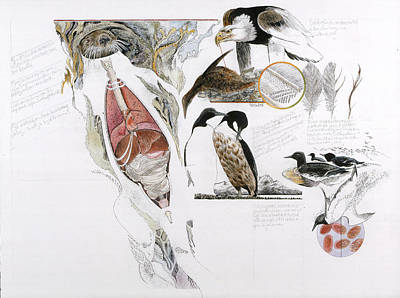 Biological Charts And Diagrams Posters