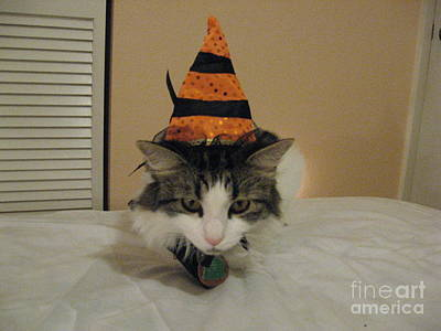 Witch Halloween Cat Wicca Photographs Posters