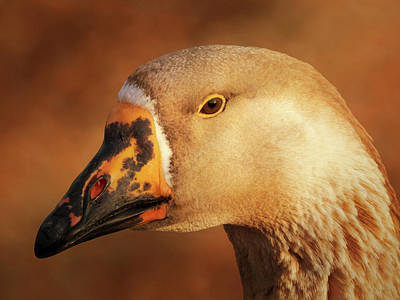 Goose Portrait Posters