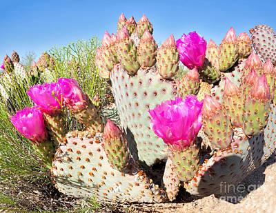 Mojave Desert Posters