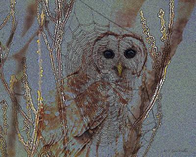 Barred Owl Digital Art Posters