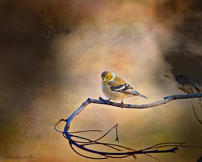Goldfinch Digital Art Posters