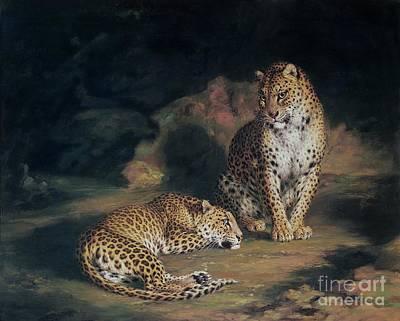 Jungle Cat Posters